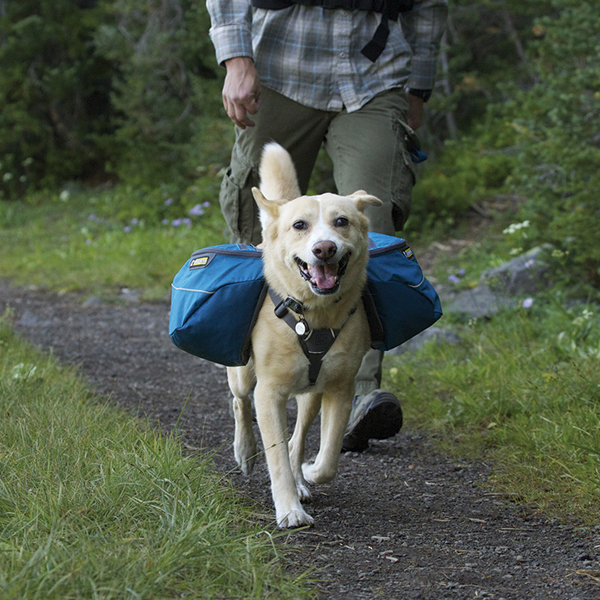 Approach Dog Pack by RuffWear - Pacific Blue