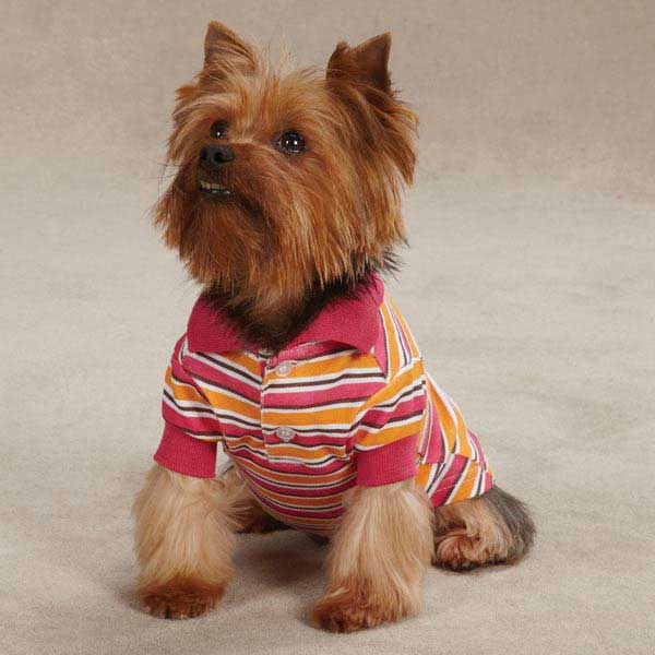 Brite Stripe Dog Polo - Raspberry