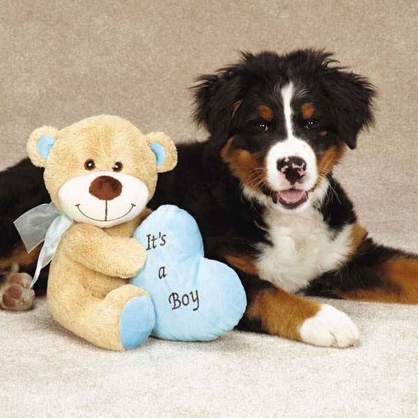Grriggles Bundle of Joy Bears Dog Toy - Blue Boy