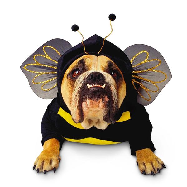 Zelda Bumblebee Halloween Dog Costume