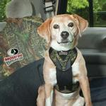 View Image 2 of Dog Auto Harness with Tether - Mossy Oak