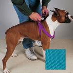 Guardian Gear Two-Step Dog Harness - Malibu Blue