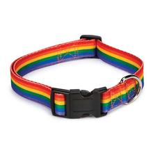 Casual Canine Puppy Pride Dog Collar - Rainbow