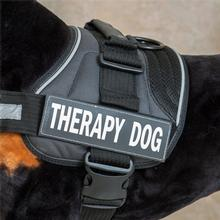 EzyDog Convert Harness Custom Side Patches - Therapy Dog