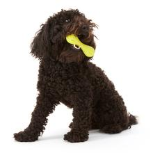 Hurley Dog Toy - Green