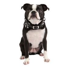 Modern Zebra Neckguard Dog Collar by Puppia - Black