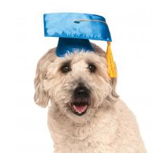 Rubies Graduation Dog Hat - Blue