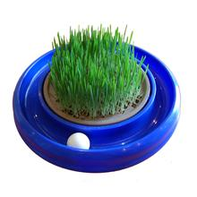 Turbo Scratcher Cat Grass