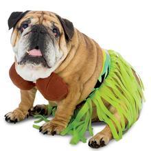 Zelda Hula Halloween Dog Costume
