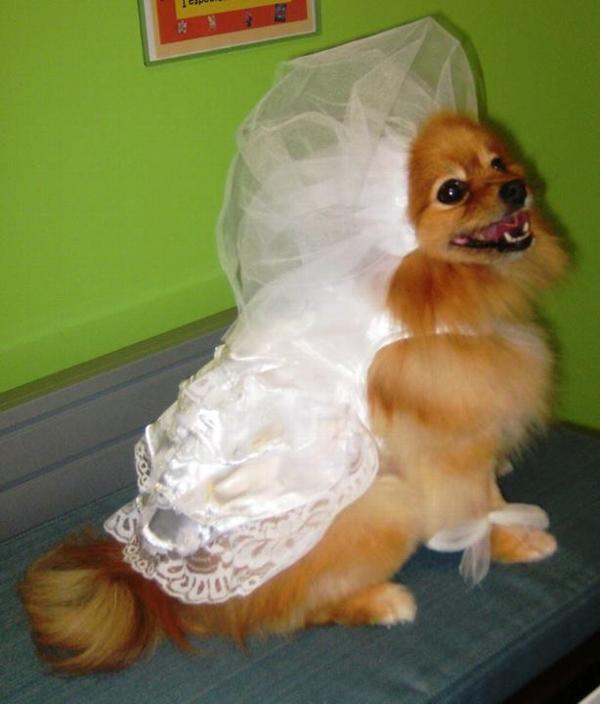 Wedding Dog Dress Set with Veil and Leash