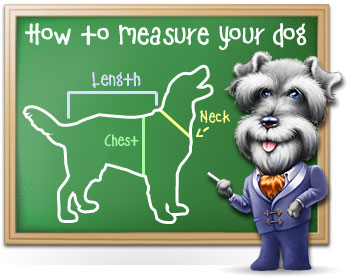 How to Measure Your Dog's Feet for Dog Clothes