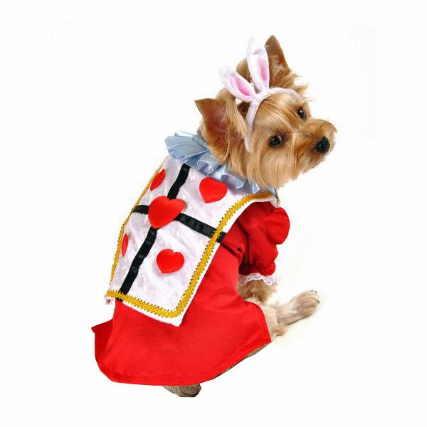 Alice in Wonderland's White Rabbit Halloween Dog Costume