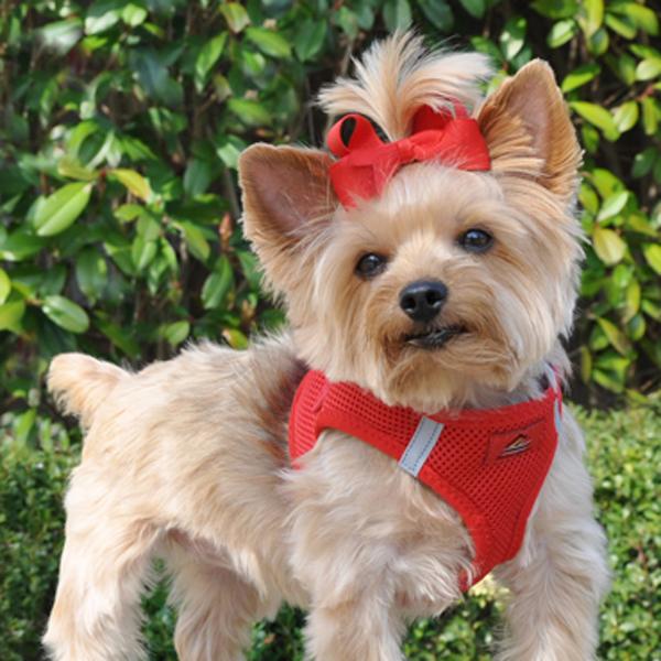 American River Ultra Choke-Free Mesh Dog Harness - Red