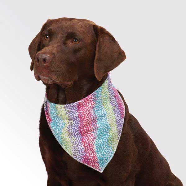 Aria Confetti Collection Dog Bandana
