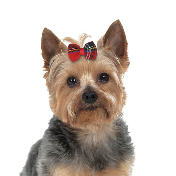 Aria Holiday Tartan Dog Bows