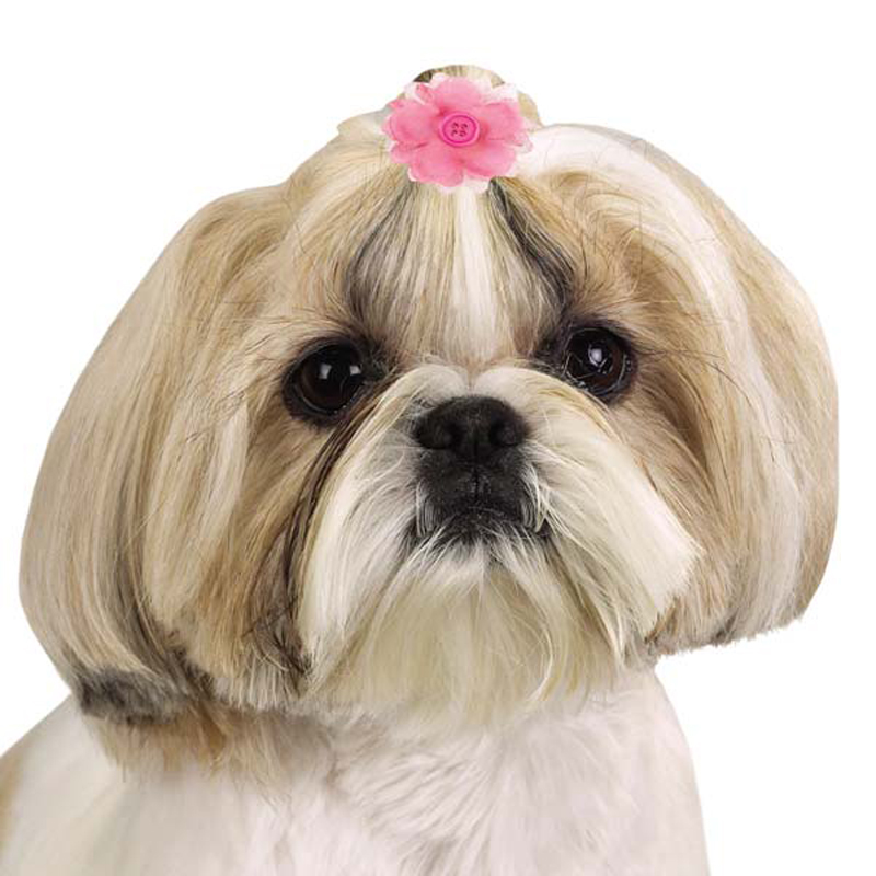 Aria Radical Brights Flower Dog Bows