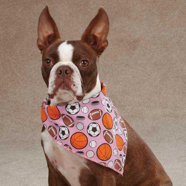 Aria Sports Hound Dog Bandana - Pink