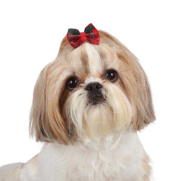Aria Yuletide Tartan Dog Bows