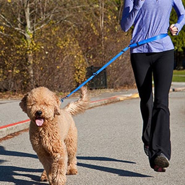 Beyond Control Dog Leash - Blue