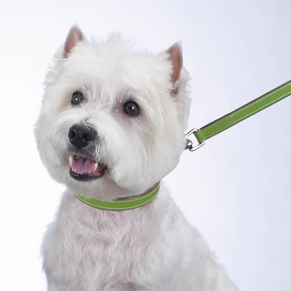 Casual Canine Flat Leather Collar - Parrot Green