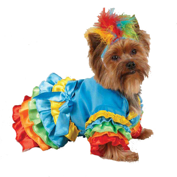 Polly Parrot Halloween Dog Costume
