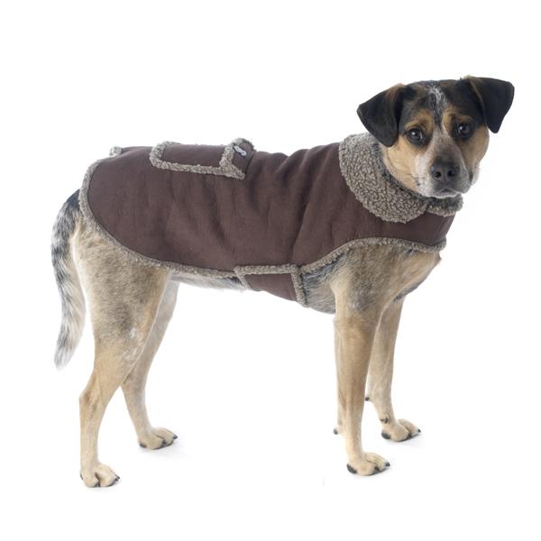 Cheyenne Dog Coat - Brown