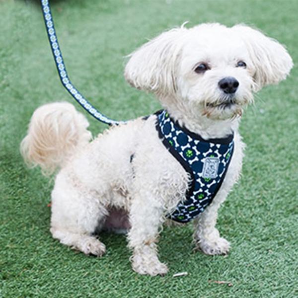 Cirque Dog Harness - Pawprint Design