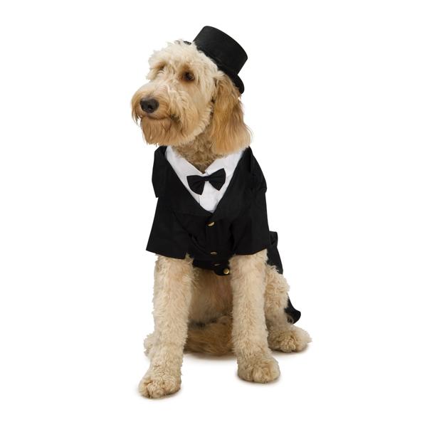 Dapper Tuxedo Dog Halloween Costume
