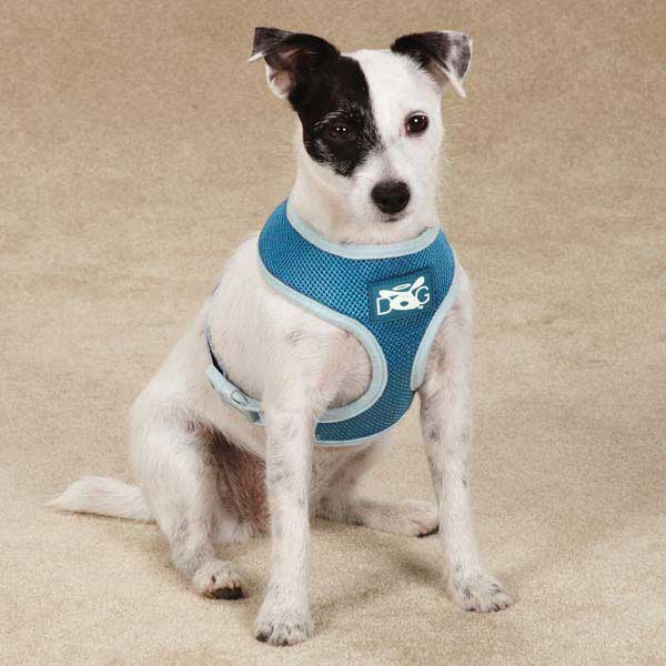 Dog is Good Halo Dog Harness - Blue