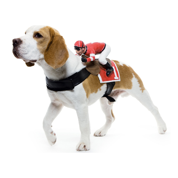 Dog Riders Harness Halloween Costume - Jockey