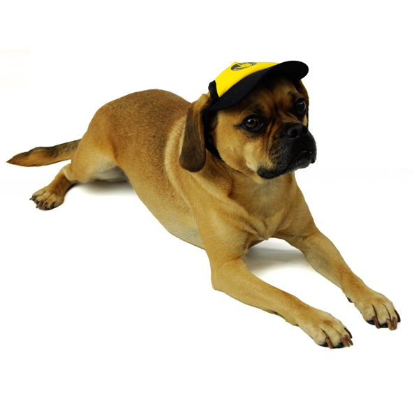 Dog Visors by Body Glove - Yellow/Black
