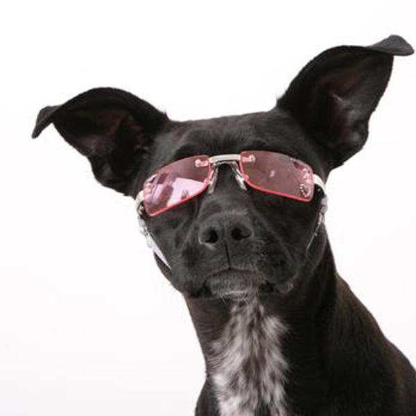 Doggles - K9 Optix Sunglasses for Dogs - Pink Heart Lens
