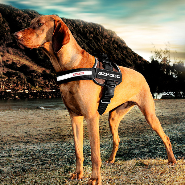 EzyDog Convert Dog Harness - Gold