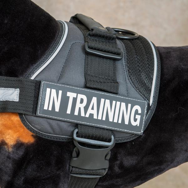 EzyDog Convert Harness Custom Side Patches - In Training