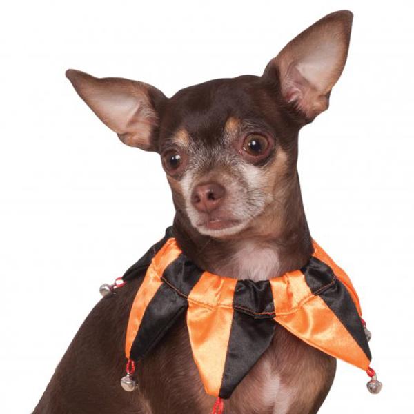 Halloween Jester Dog Collar Scrunchie