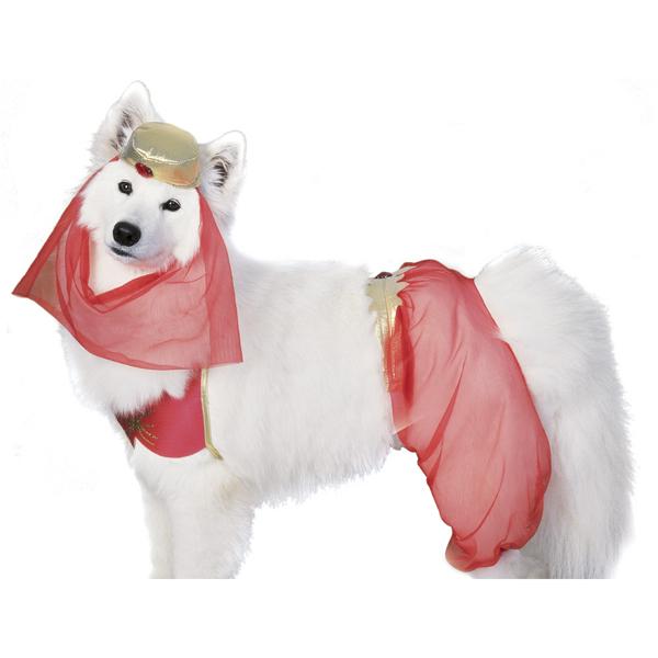 Harem Dog Halloween Costume