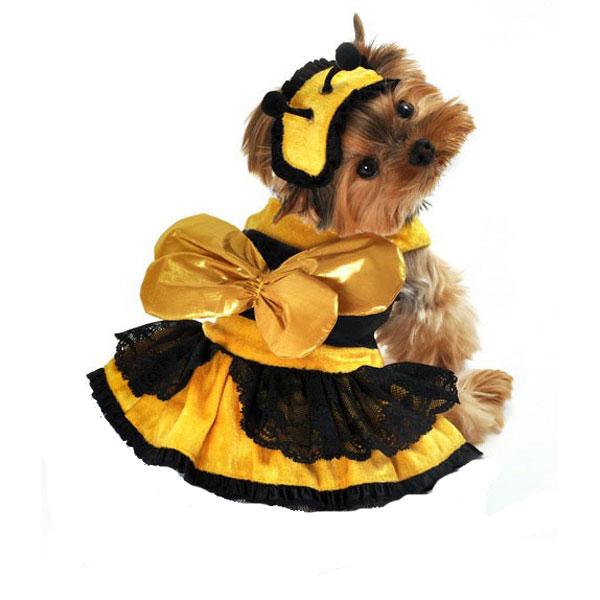 Honey Bee Darlin' Dog Costume