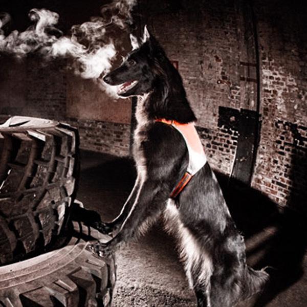Hurtta Visibility Dog Vest - Orange