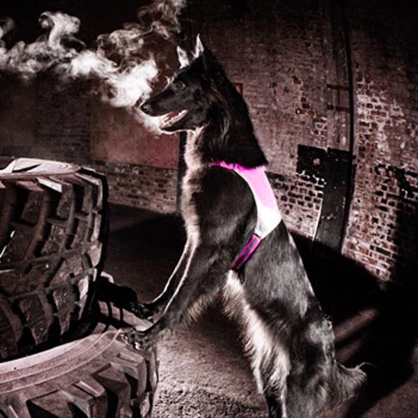 Hurtta Visibility Dog Vest - Pink