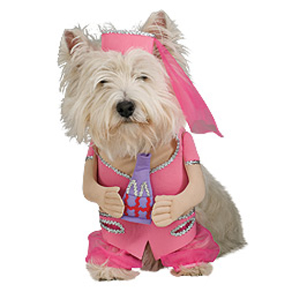 I Dream of Jeannie Dog Halloween Costume