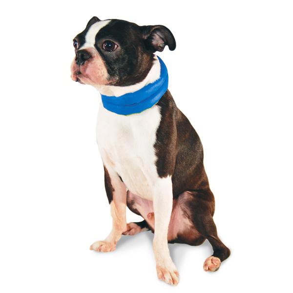 iCool Dog Scarf by Dogo - Blue
