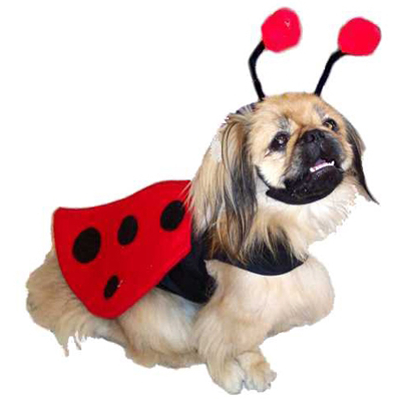 Ladybug Harness Dog Costume