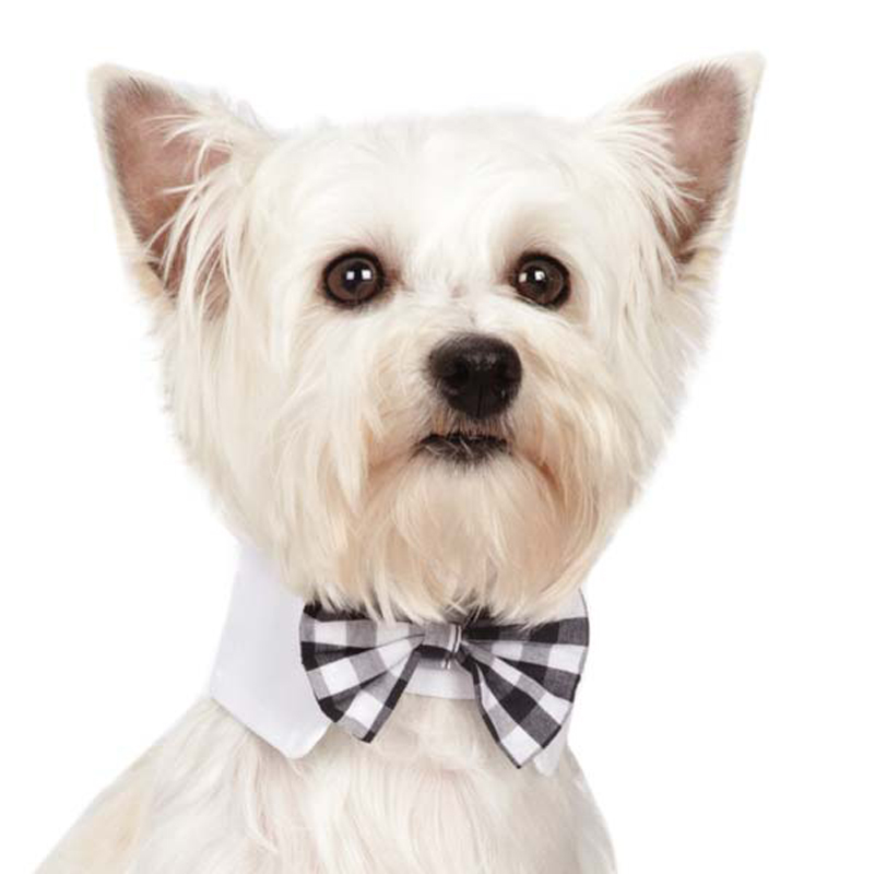 M. Isaac Mizrahi Dog Bowtie - Gingham