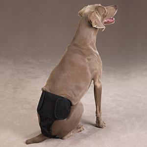 Male Pup Pants