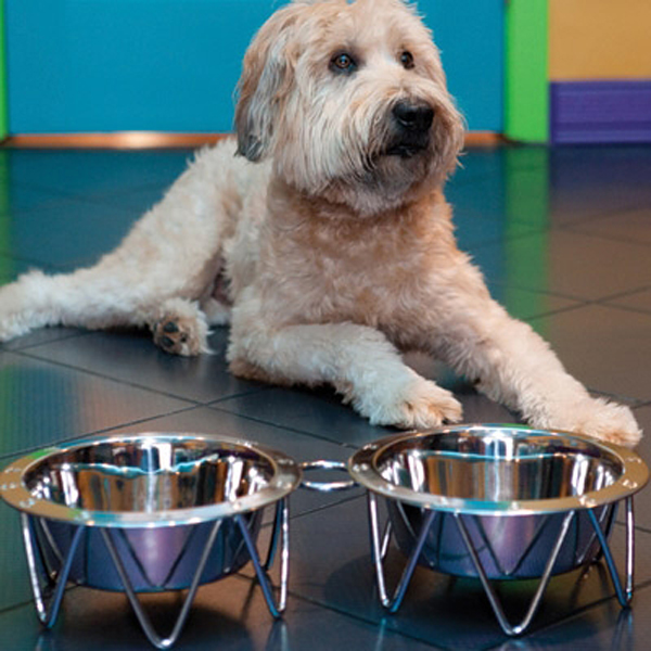 Martinique Metal Pet Diner Set