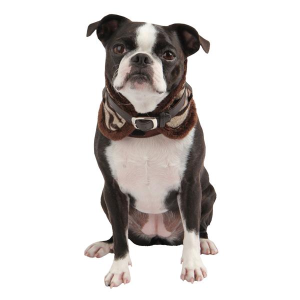 Modern Zebra Neckguard Dog Collar by Puppia - Brown