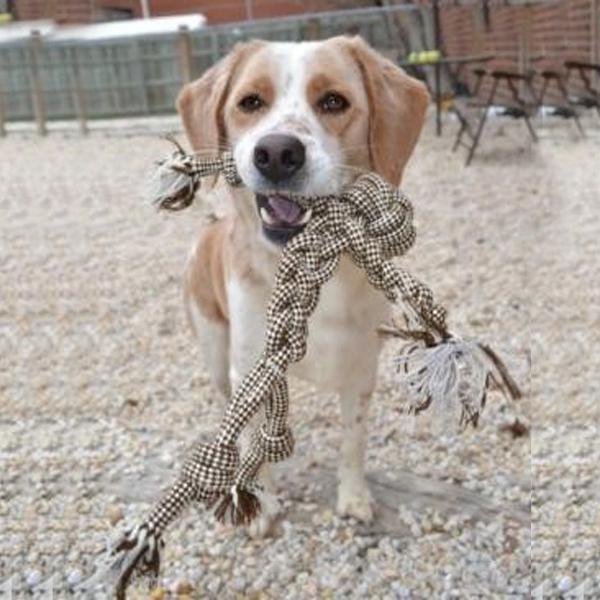 Mr. Roper Dog Toy