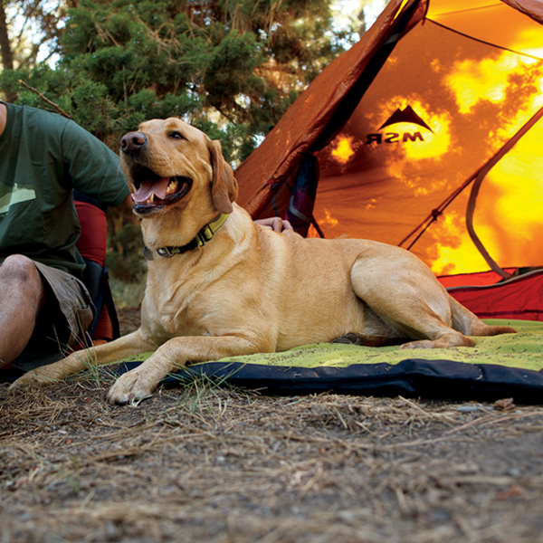 Mt. Bachelor Pad Dog Bed by RuffWear - Forest Green