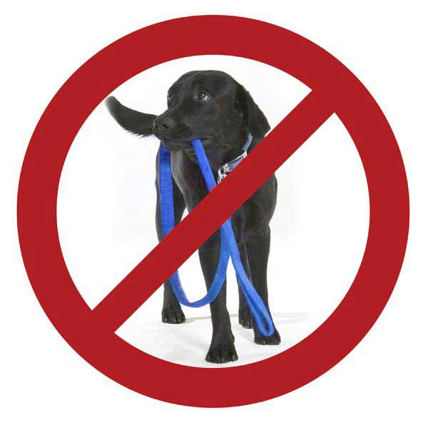 Patento Pet Anti Bite Dog Leash - Blue