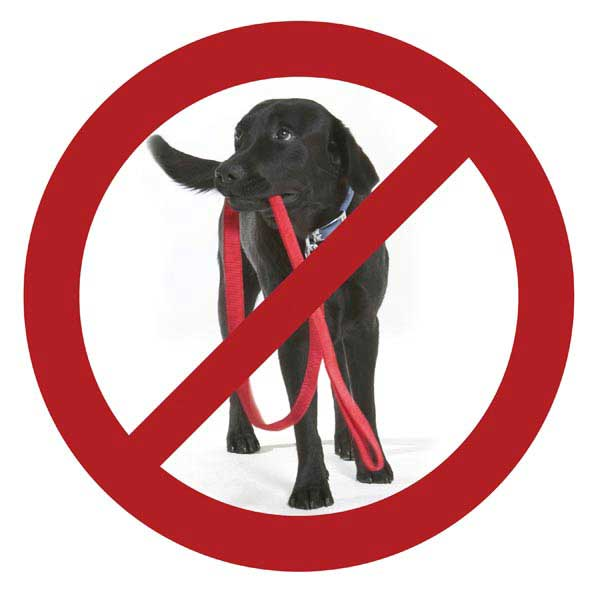 Patento Pet Anti Bite Dog Leash - Red